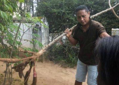 Pendant ce temps là, Coco récolte le manioc dans la région d'Anbositra