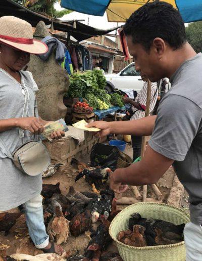 Achats de poules au marché